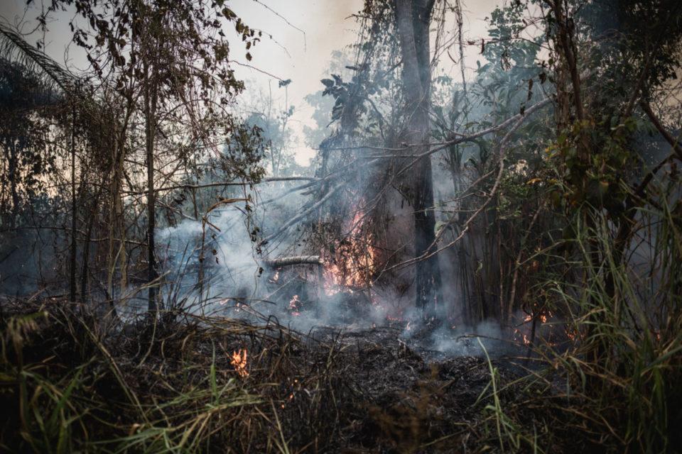 Queimar a Amazônia (Nacho Yuchark/La Vaca)